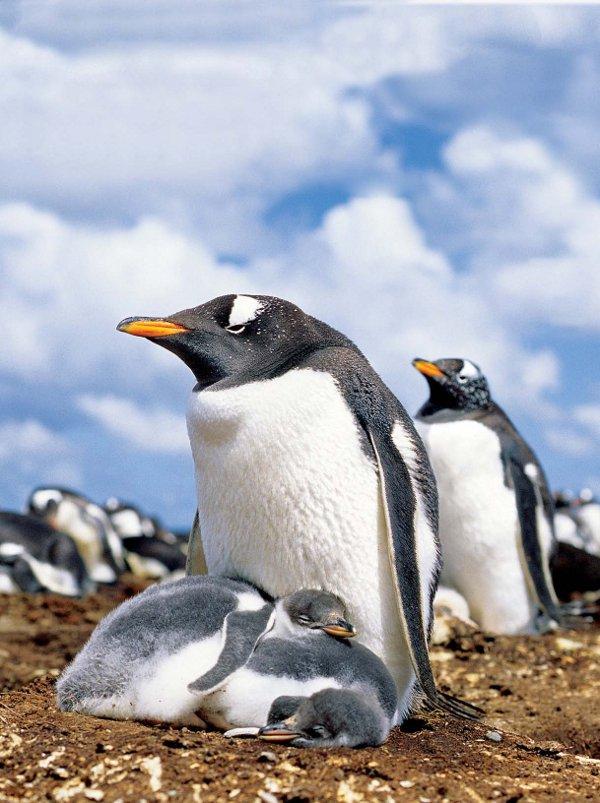 Antarctica Crystal Desert Penguins