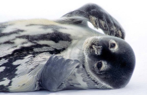 Antarctica Crystal Desert Sea Lion
