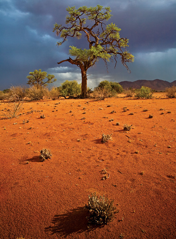 Nature is my Kingdom Namibia Africa Canon 5D 17-40 Gitzo Traveler Tripod