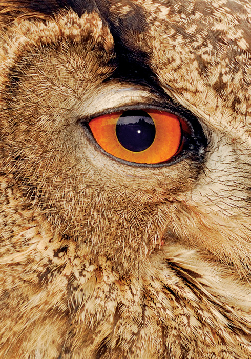 Ideal Three Lens Kit Owl Eye Telephoto