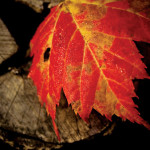 PHOTONews Autumn 2010 Challenge Winners