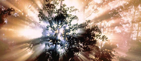 Photo Copyright Darwin Wiggett - Sunlight Through the Trees