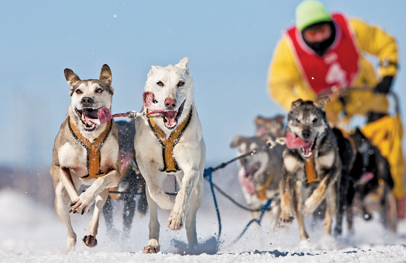 Winter Photography Dogsled
