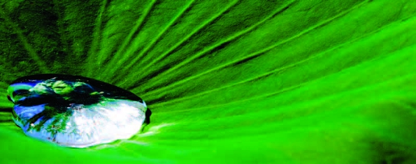 PHOTONews Autumn 2010 Reader's Gallery Eric Meunier Droplet on a Lotus Leaf
