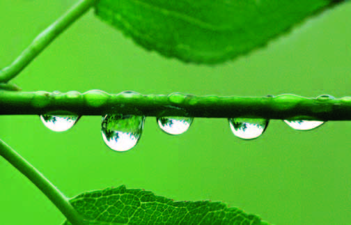 PHOTONews Summer Challenge Renata Lenartowicz Raindrops on a Branch