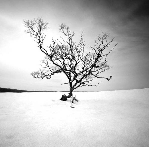 Photo Copyright Hakan Strand - Winter Tree II, Sweden
