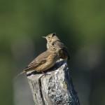 Two-Way Fluid Head For Birders & Digiscopers