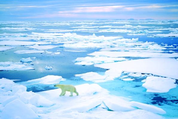 Photo Copyright Wayne Lynch - Polar Bear Big