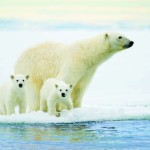 Svalbard – A Polar Oasis by Wayne Lynch
