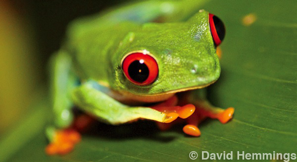 David Hammings - Discovering Macro Photography - Frog