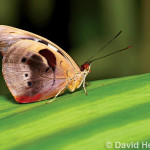 Discovering Macro Photography