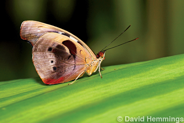 David Hammings - Discovering Macro Photography - Moth