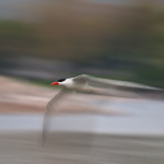 Panning Photography by Kevin Pepper