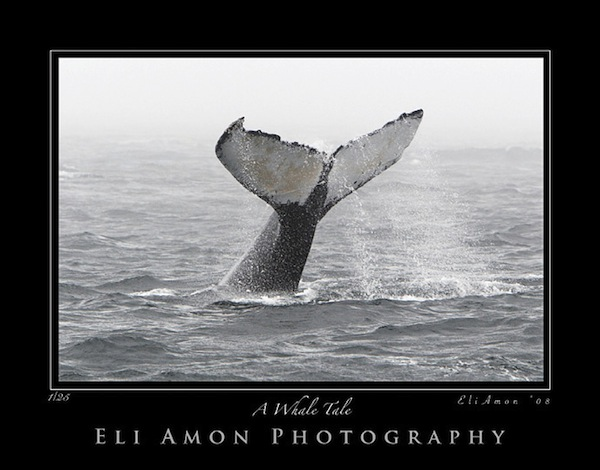 Eli Amon - Gearing up for Photo Adventures - Monochrome Whale Watching