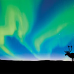 Arctic Aurora & Autumn Caribou by Wayne Lynch