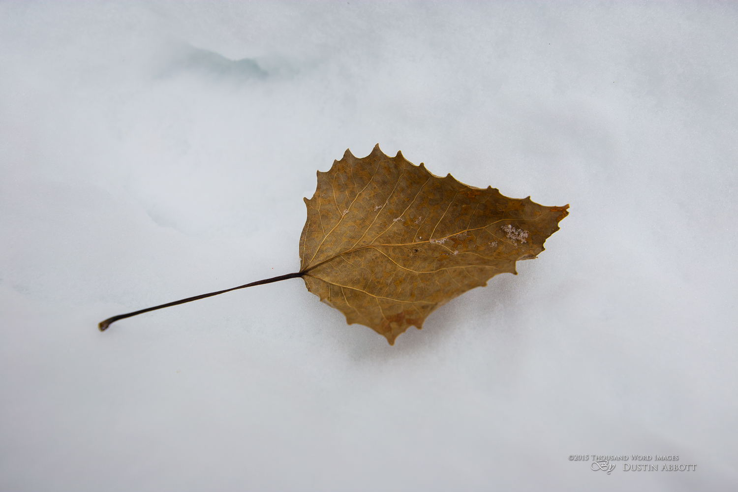 Leaf Resolution