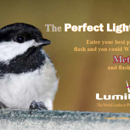 LumiQuest: The Perfect Light Photography Contest