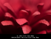 Tamron 90 Macro _DSC2467 16-Mar-03s