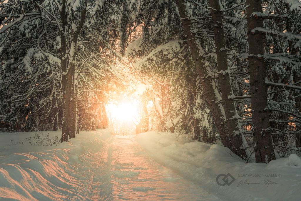 Path Image - Ray Majoran